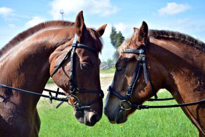 В России день лошади отмечается 31 августа (по старому стилю 18го), в день Святых Флора и Лавра, покровителей лошадей на Руси.
