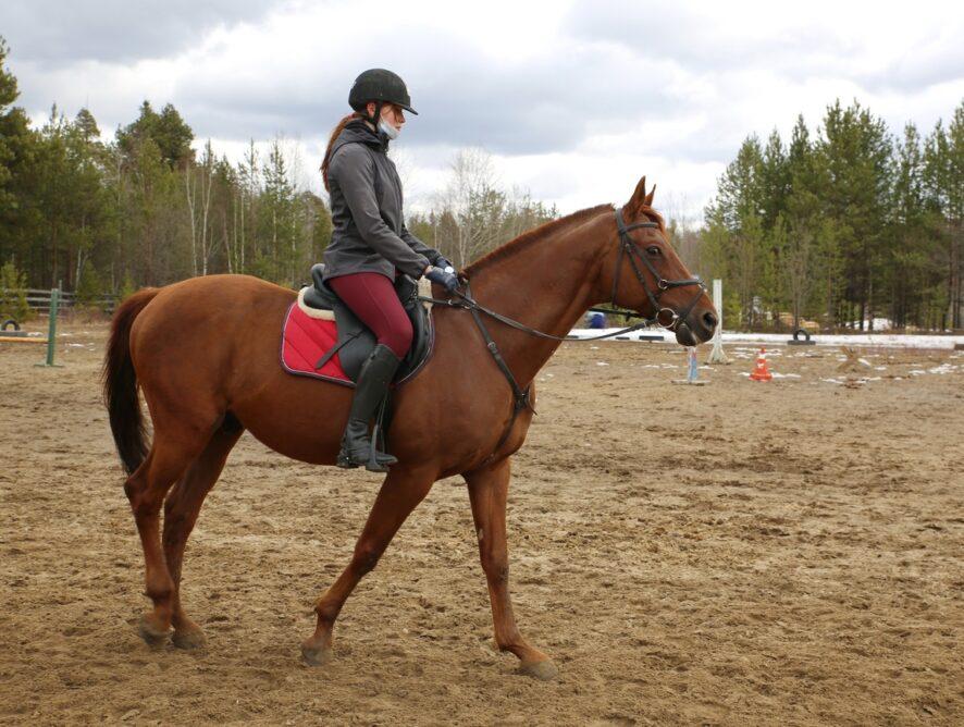 17 апреля с рабочим визитом Советский посетил президент Федерации конного спорта ХМАО – Югры